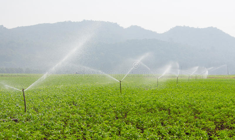 Morning view of a hand line sprinkler system in a farm field.  royalty free stock photo