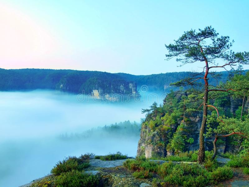 Morning view over rock and fresh green trees to deep valley full of light blue mist. Dreamy spring landscape within daybreak. After rainy night. Blue pink sky royalty free stock photos