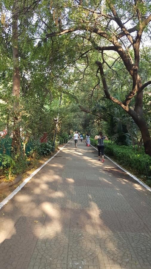 Morning walk track with tiled path. People do morning walk on a sun lit walking track in neighborhood garden lined up with tree royalty free stock photography