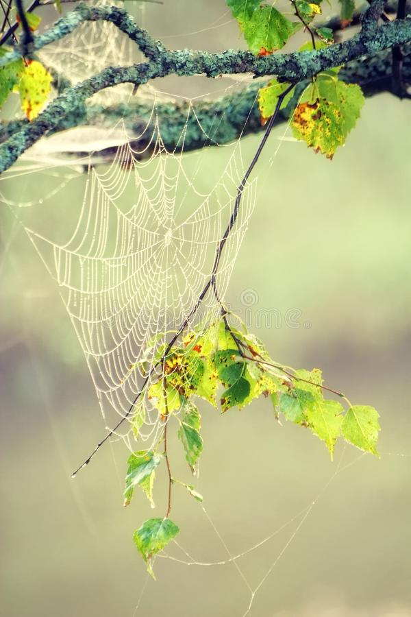 Download Morning web stock image. Image of grass, drops, branch - 13284617