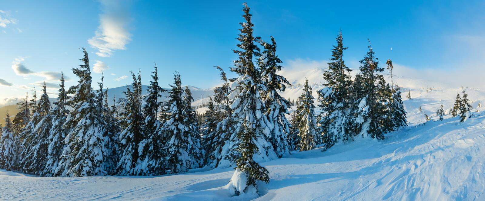 Morning winter mountain landscape (Carpathian). Morning winter mountain landscape with clouds and fir trees on slope (Carpathian royalty free stock photo