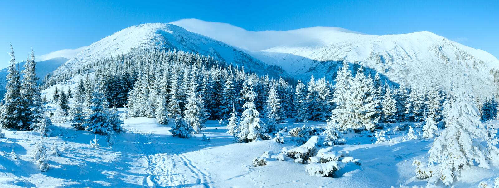 Morning winter mountain landscape. With fir trees on slope stock photography