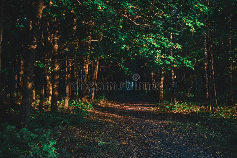 Morning woods royalty free stock images