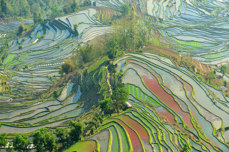 Download Morning Of YuanYang Rice Terrace Stock Image - Image: 8949765