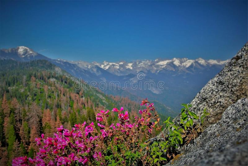 Moro Rock, sequoia e parco nazionale di re Canyon, California immagini stock