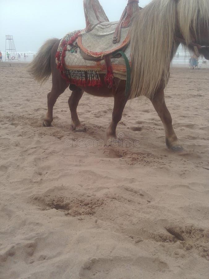 moroccan zdjęcie stock