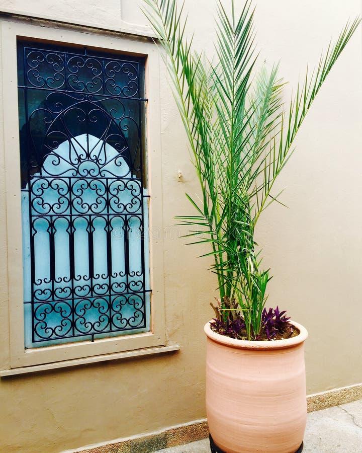moroccan fönster arkivfoton