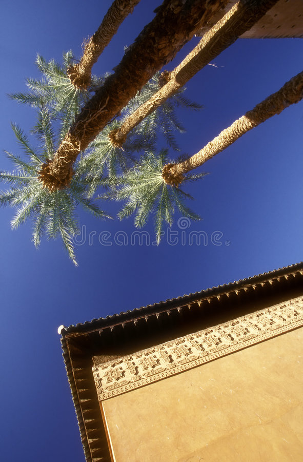Moroccan palms royalty free stock images