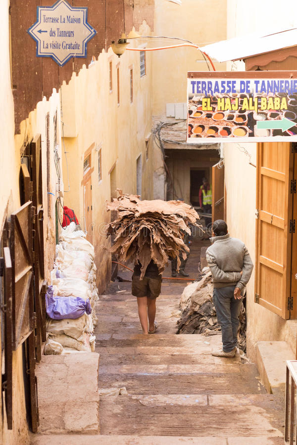 Free Moroccan Worker Carrying Camel Hides To The Tannery Stock Image - 65677191