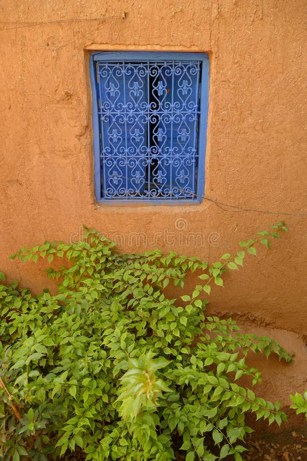 Green plant underneath a blue window with a decorative blue metal grid in Marrakech royalty free stock images