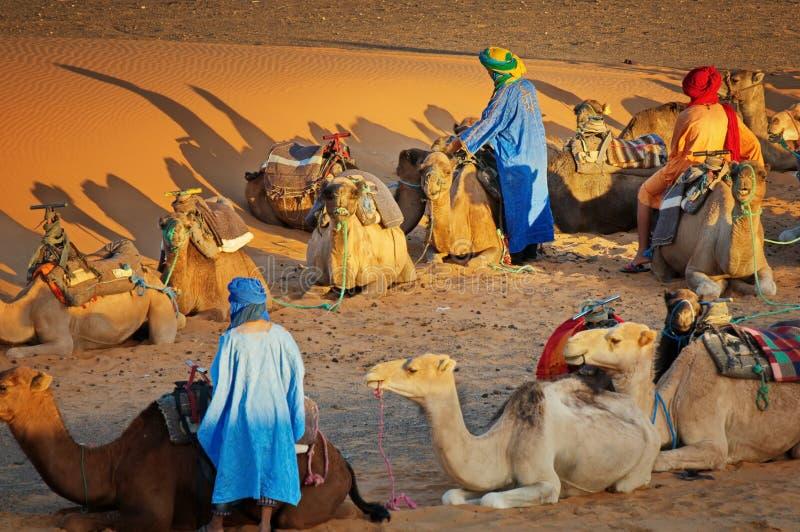 Morocco Berbers in the desert - camel safari, dromadaires trekking tour royalty free stock photos