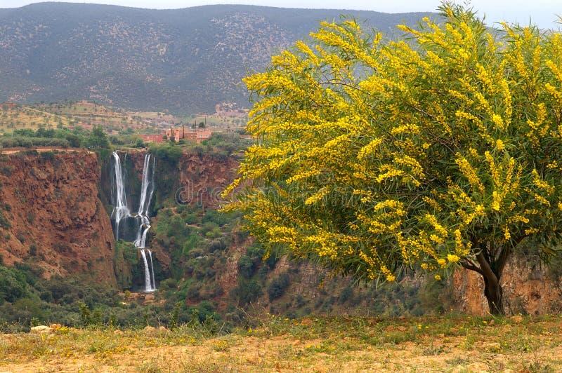 Morocco wodospad ouzud d obrazy royalty free