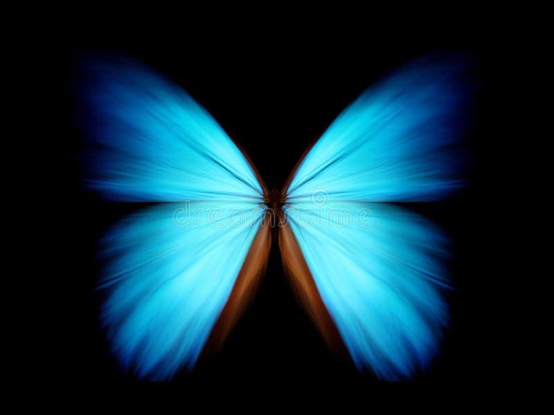 Morpho azul - sumário fotografia de stock royalty free