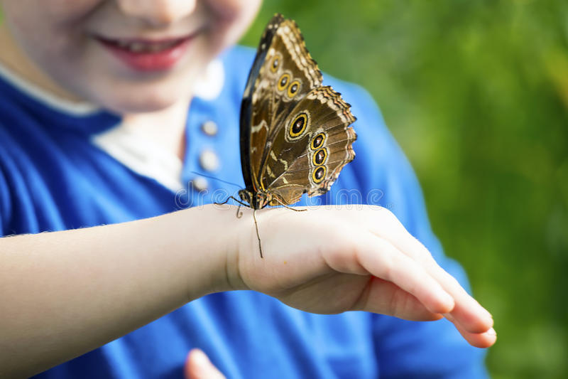 Morpho butterfly on a hand. Close up photo of big butterfly stand on a child hand royalty free stock images