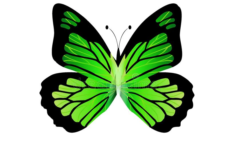 Morpho green butterfly isolated on white background. Illustration design stock photography