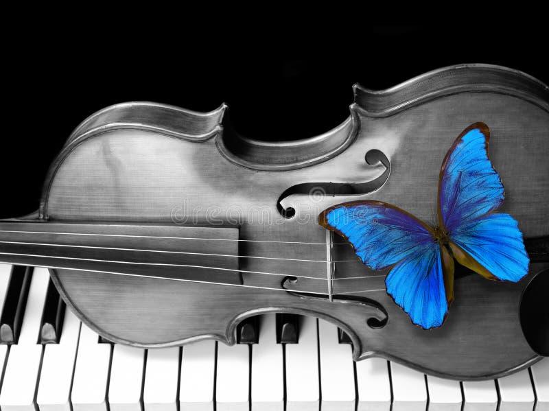 Morpho, violino e piano della farfalla fotografia stock
