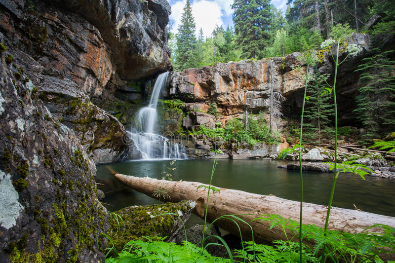 Morressey Falls Waterfall in the sub alpine forest in Fernie British Columbia royalty free stock image