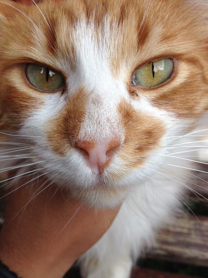 Morris el gato royaltyfria bilder