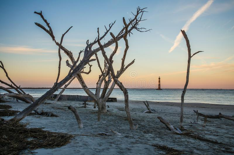 Morris Island Lighthouse na distância, quadro por árvores desencapadas no por do sol fotos de stock