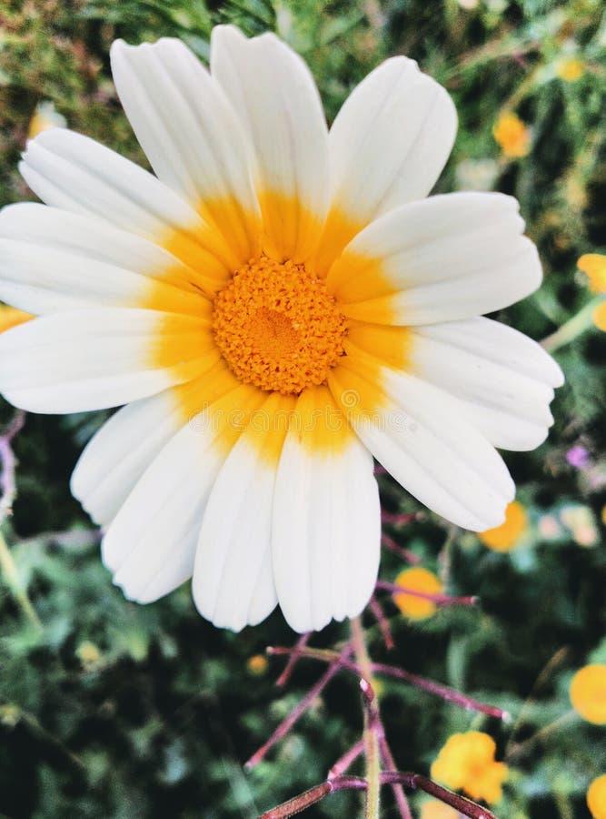 Morroco da natureza de Fleur bonito fotografia de stock royalty free