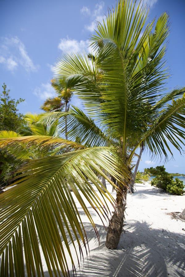 Morrocoy国家公园,有椰子树的一个天堂,白圣 库存图片