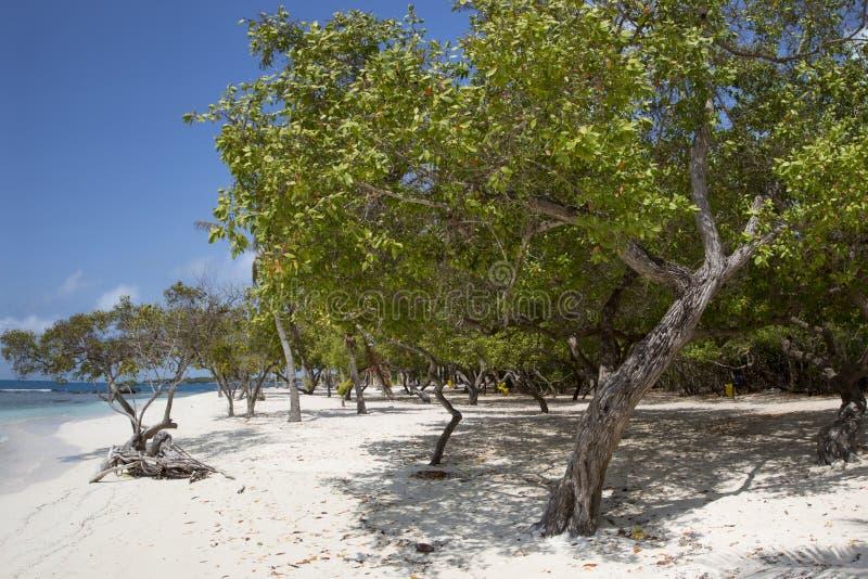 Morrocoy Nationaal park, een paradijs met kokospalmen, wit San stock afbeelding