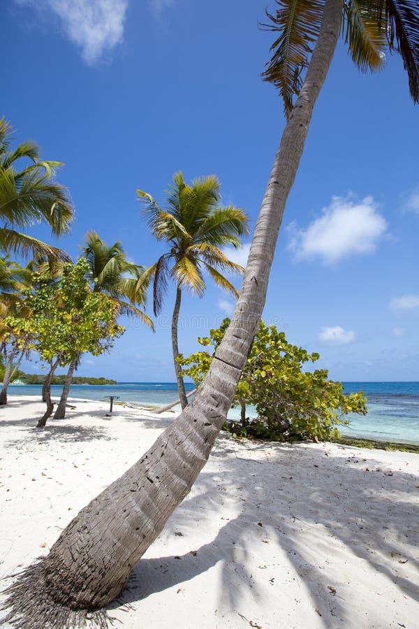 Morrocoy nationalpark, ett paradis med kokospalmer, vita san arkivfoto