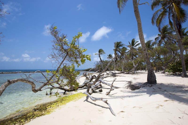Morrocoy park narodowy, raj z kokosowymi drzewami, biały San fotografia stock