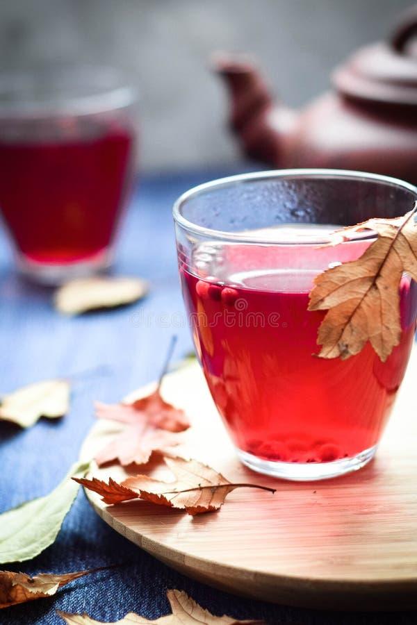 MORs de thé de canneberge dans verre-verre sur le fond bleu dans verre et bouilloire de fond le deuxièmes photo libre de droits