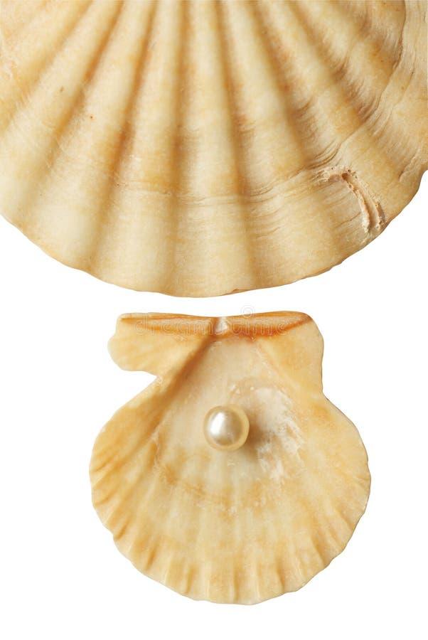 morska muszla perłowy zdjęcia royalty free