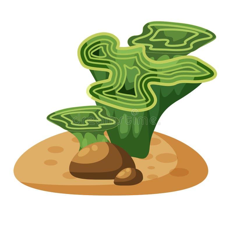 Morska zielonych alg gałęzatka, zasadza podwodnego, odosobniony na białym tle, wektor, kreskówka styl ilustracji
