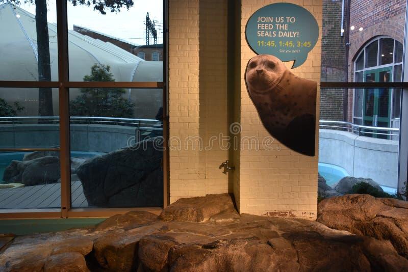 Morski akwarium w Norwalk, Connecticut obrazy stock