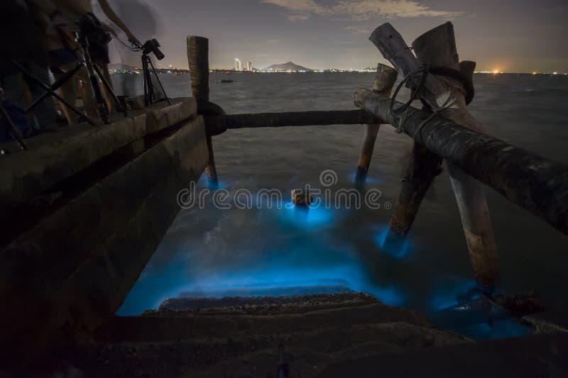 Morski hydroplankton zdjęcie stock