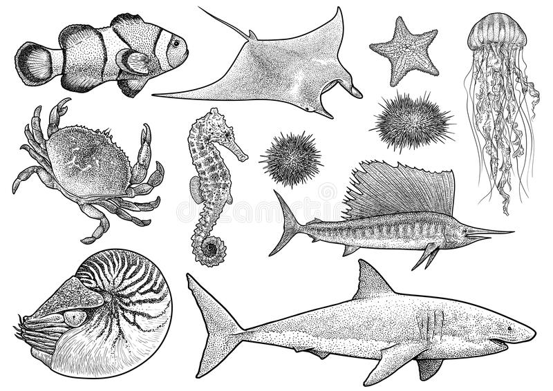 Morskich zwierząt inkasowa ilustracja, rysunek, rytownictwo, atrament, kreskowa sztuka, wektor zdjęcia stock