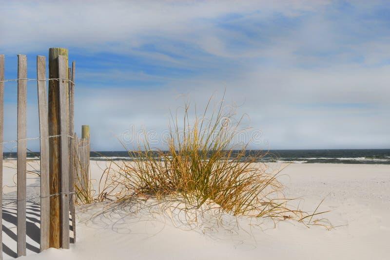 morskie plażowe trawy fotografia royalty free