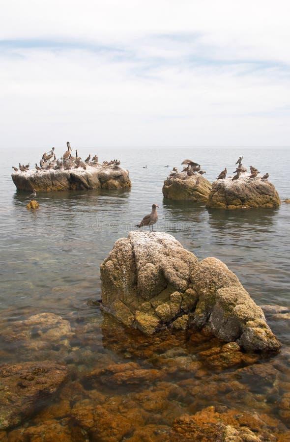 morskie ptaki rock zdjęcie stock