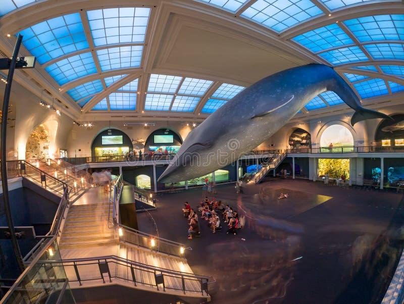 Morskiego życia pokój przy Amerykańskim muzeum historia naturalna w Ne obrazy royalty free