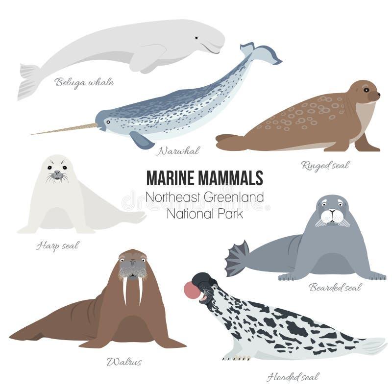 Morskiego ssaka set Mors, narwhal, harfa, brodata, upierścieniona, kapturzasta foka, bieługa wieloryb Foki zwierzęca biegunowa ko royalty ilustracja