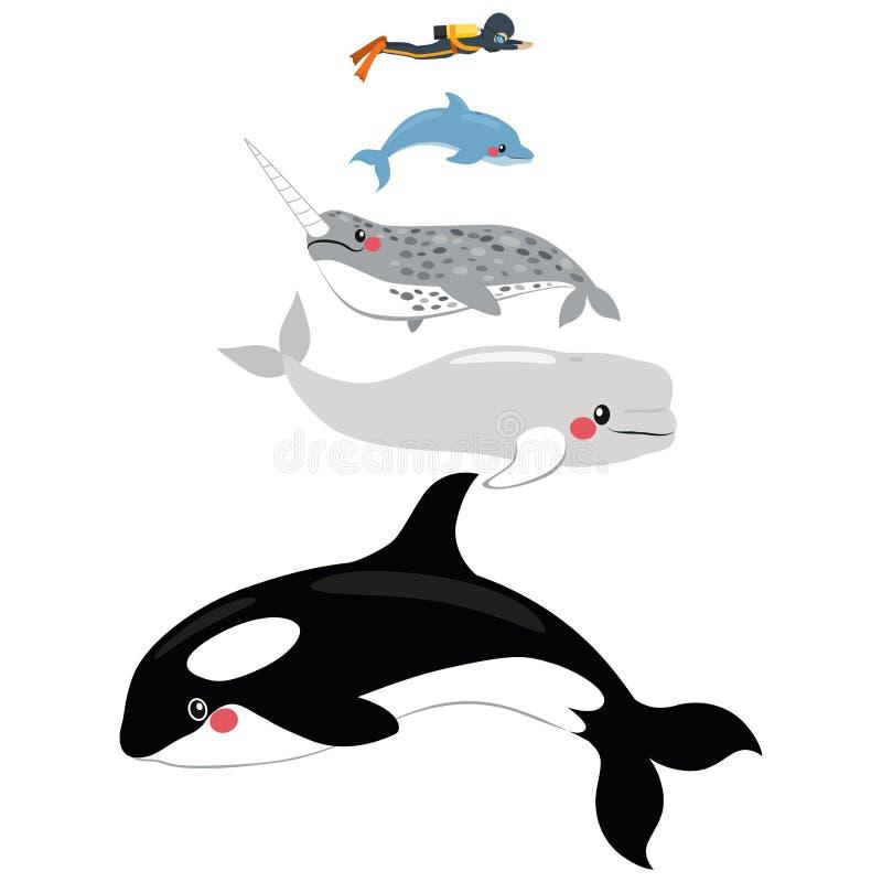 Morskiego ssaka skala ilustracja wektor