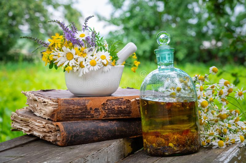 Mortar of healing herbs, bottle of healthy essential oil or infusion, old books and bunch of chamomile plant. royalty free stock photo