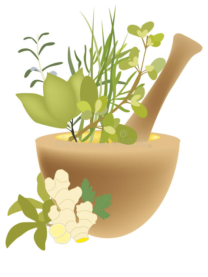 Download Mortar with herbs stock vector. Image of cure, herbs - 10809614