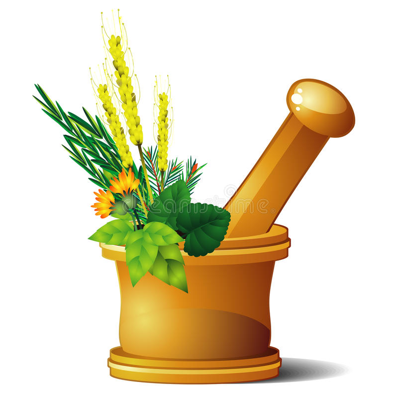Download Mortar with herbs stock vector. Image of cure, nature - 18524207