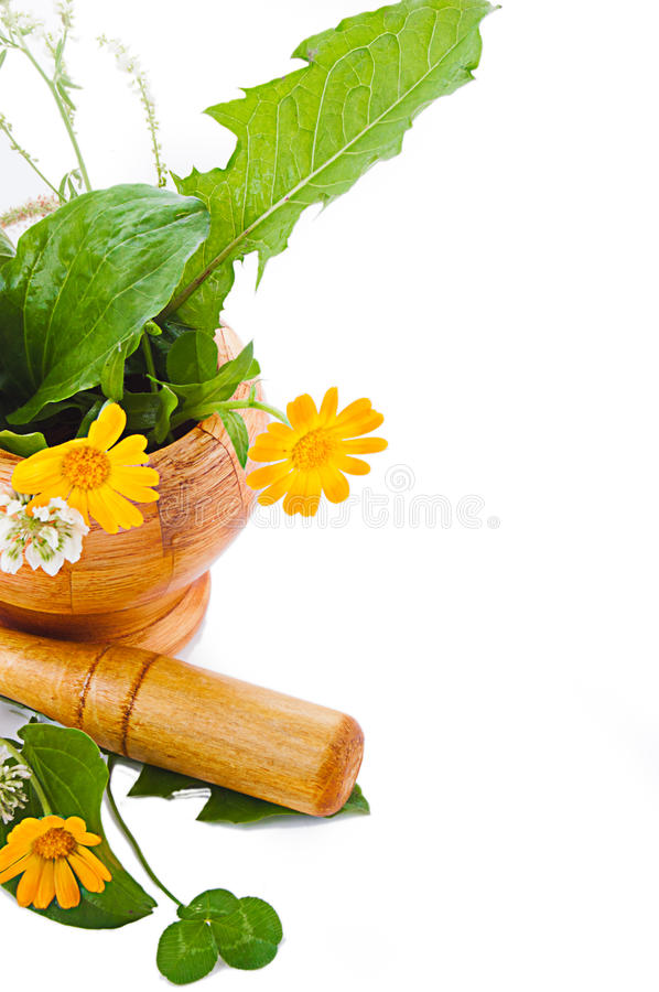 Download Mortar With Herbs And Marigolds Stock Image - Image: 23488885
