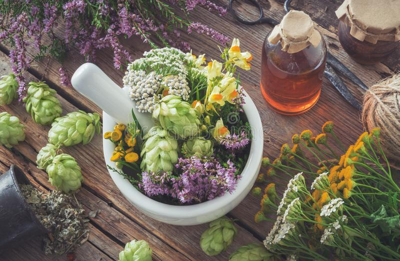Mortar of medicinal herbs, healthy plants, bottle of tincture or infusion. Top view. Herbal medicine royalty free stock image