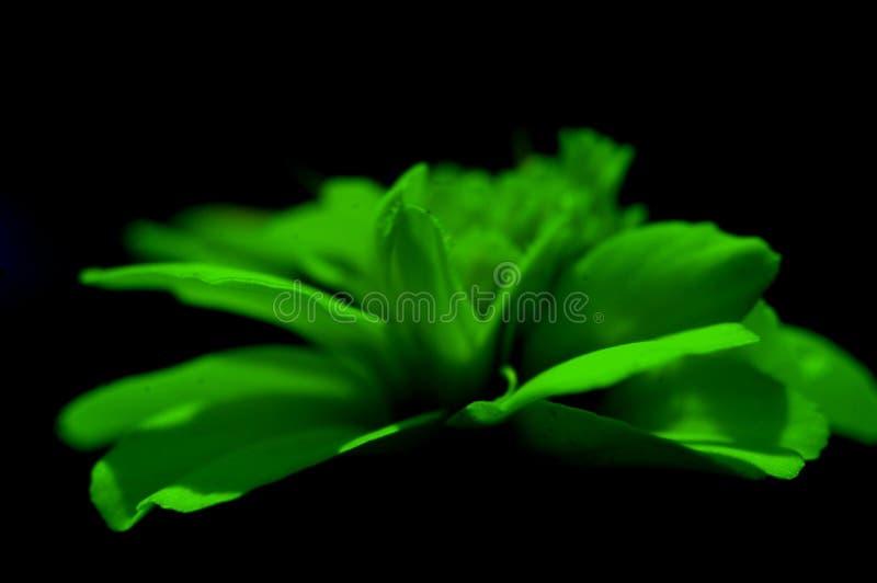Morte verde fotografia stock