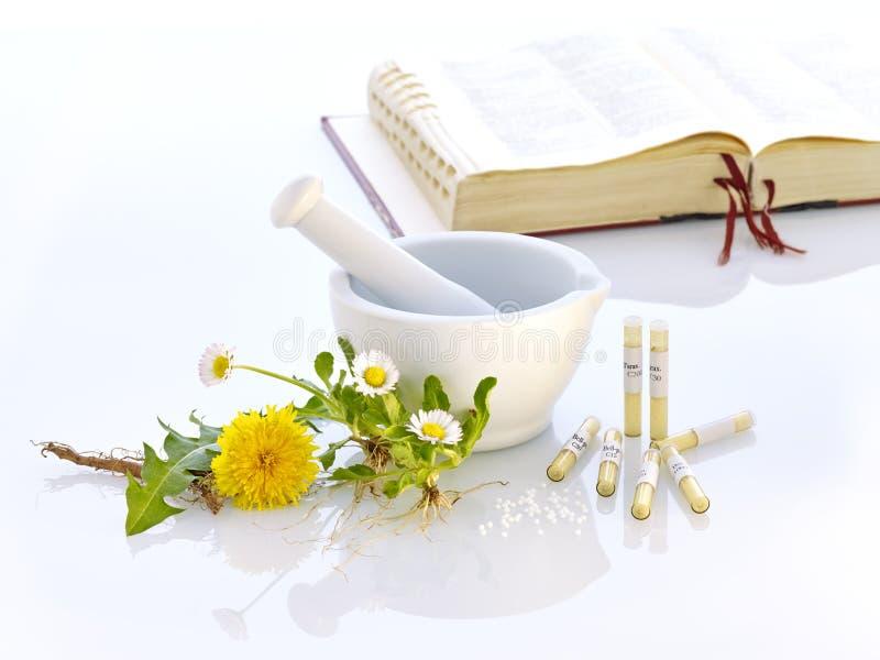 Mortelmaskros Daisy Natural Medicine arkivbilder