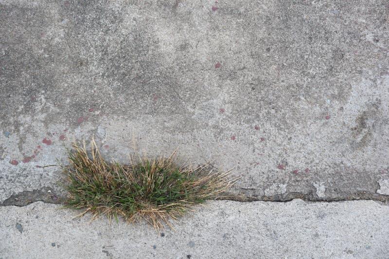 Mortero con el fondo de la textura de la hierba foto de archivo