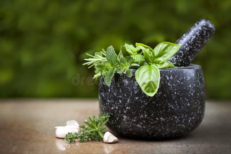 Mortero y maja con las hierbas frescas foto de archivo libre de regalías