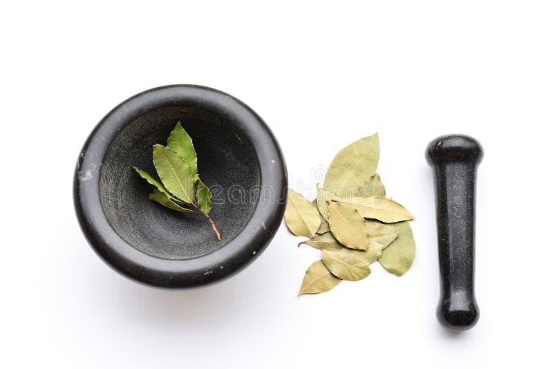 Mortier avec des feuilles de baie photos libres de droits