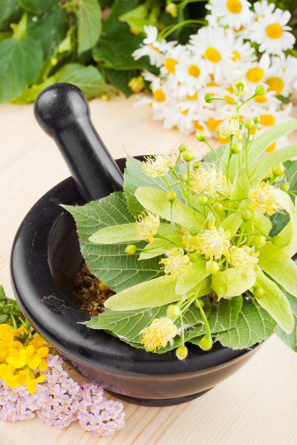 Mortier et pilon avec les fleurs de tilleul, le chamomille et le mille-feuille images libres de droits